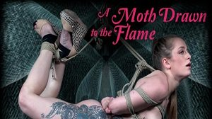 cora moth a moth drawn to the flame